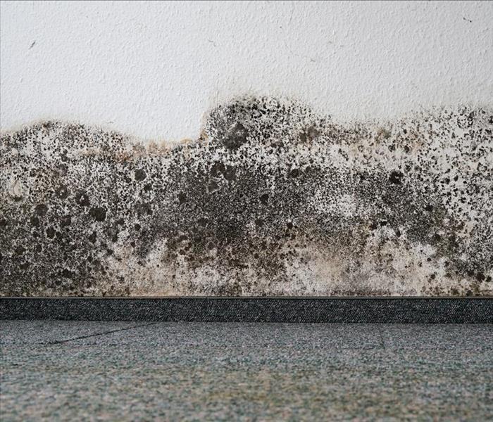 mold damage on lower wall