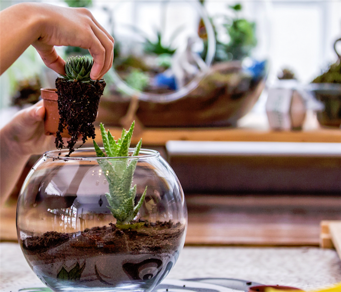 a person moving a plant out of one terrarium and into a pot