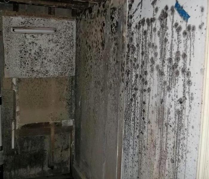 Mold Remediation How Mold can affect your Health
